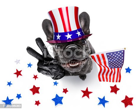 istock independence day 4th of july dog 1154998083