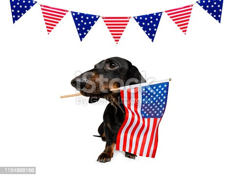 istock independence day 4th of july dog 1154998166