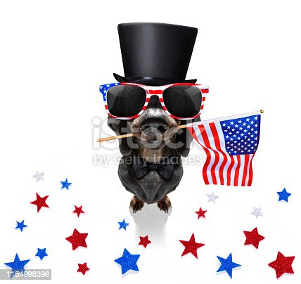 815401356istockphoto independence day 4th of july dog 1154998396
