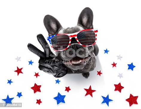 istock independence day 4th of july dog 1154998415