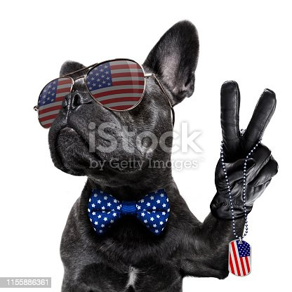 istock independence day 4th of july dog 1155886361
