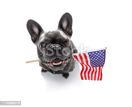 815401356 istock photo independence day 4th of july dog 1155886576