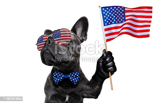 istock independence day 4th of july dog 1156297854