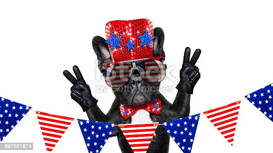 istock independence day 4th of july dog 697551874