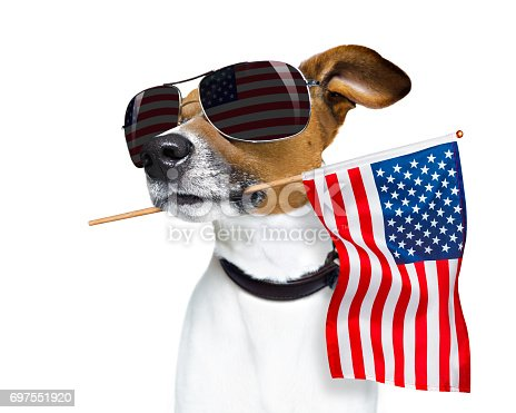 istock independence day 4th of july dog 697551920
