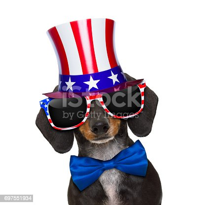 509363072istockphoto independence day 4th of july dog 697551934