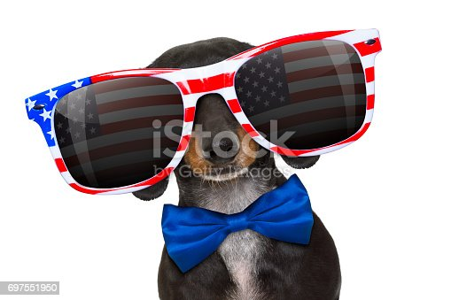 istock independence day 4th of july dog 697551950