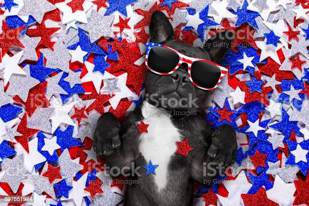 Independence day 4th of july dog picture id697551974?b=1&k=6&m=697551974&s=612x612&h=xzybair80s6qy1s5elefmcipeb2zwpxrkubsul4 gry=