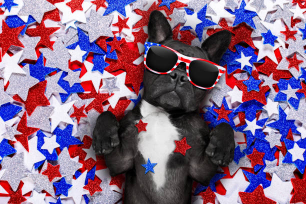 independence day 4th of july dog french bulldog waving a flag of usa and victory or peace fingers on independence day 4th of july with sunglasses independence day photos stock pictures, royalty-free photos & images
