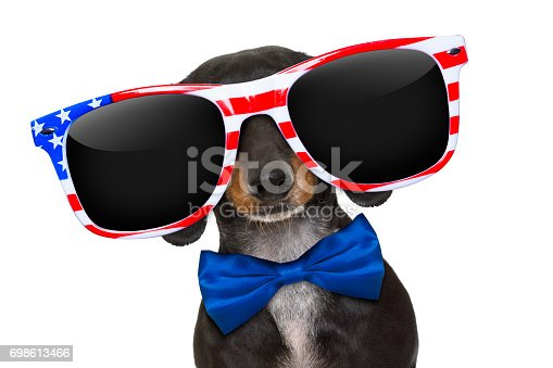 509363072istockphoto independence day 4th of july dog 698613466