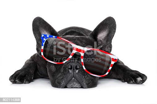 istock independence day 4th of july dog 802114368