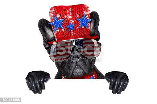 istock independence day 4th of july dog 802114388