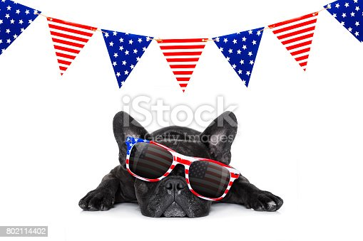 istock independence day 4th of july dog 802114402