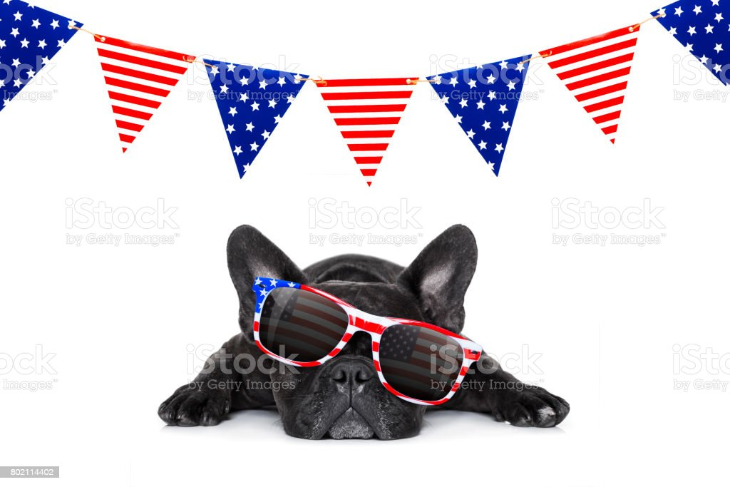 independence day 4th of july dog stock photo