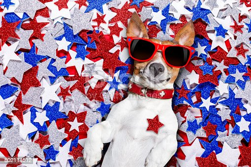 istock independence day 4th of july dog 802114512