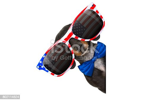 istock independence day 4th of july dog 802114524