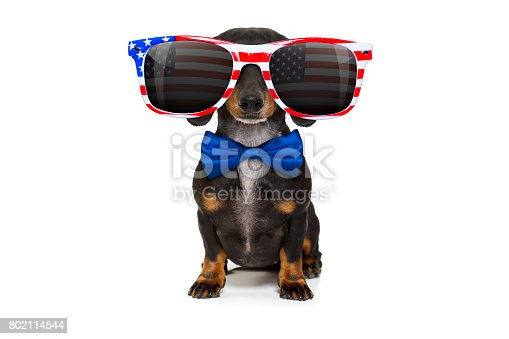 815401356 istock photo independence day 4th of july dog 802114544