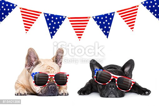 istock independence day 4th of july dog 815401356