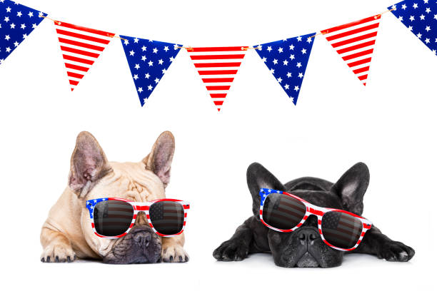 independence day 4th of july dog - fourth of july стоковые фото и изображения