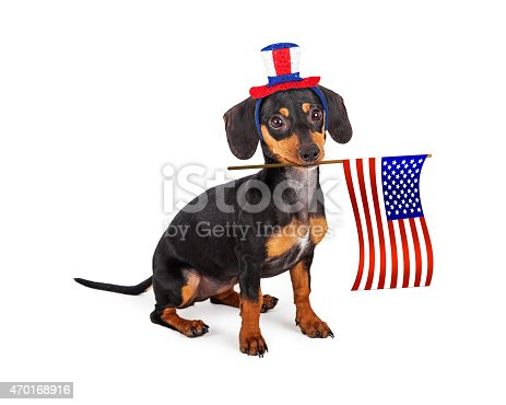 489224301 istock photo Independence Day Dachshund Dog 470168916