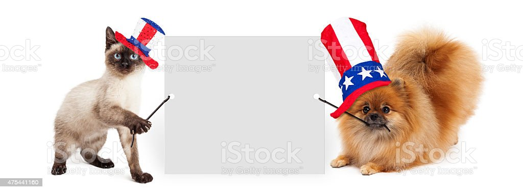 Independence Day Dog and Cat Holding Up Banner stock photo