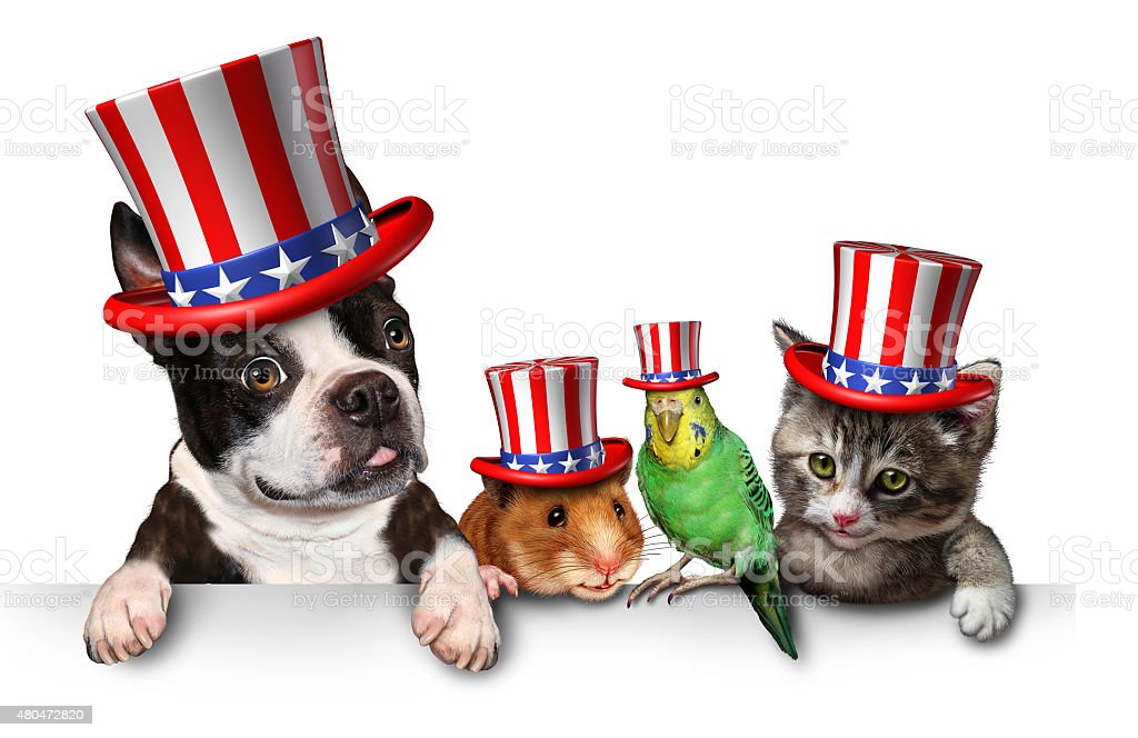 Independence Day Pets stock photo