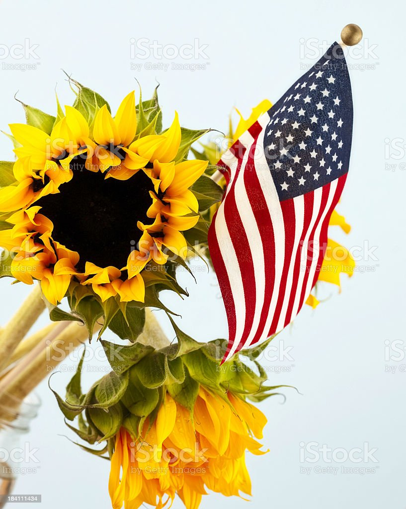 Independence Day Sunflowers and Flag stock photo