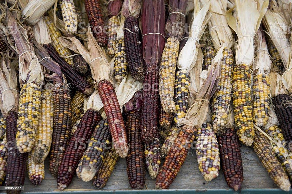 India corn royalty-free stock photo
