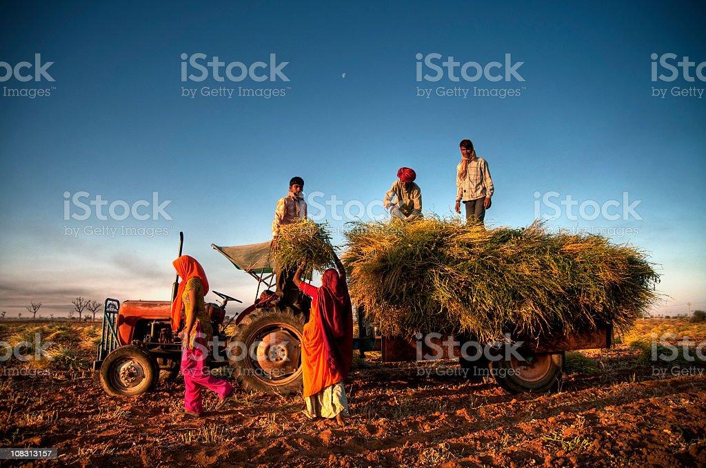Indien Landwirtschaft – Foto