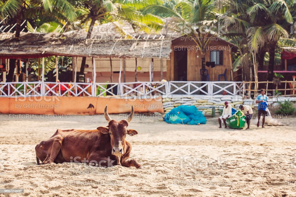 India, Gokarna, Karnataka, Asia - Royalty-free Animal Stock Photo