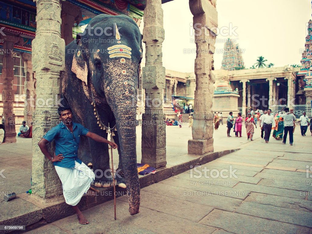 India. Meenakshi Amman Temple. Blessing elephant with his mahout (elephant handler) on the temple yard. stock photo