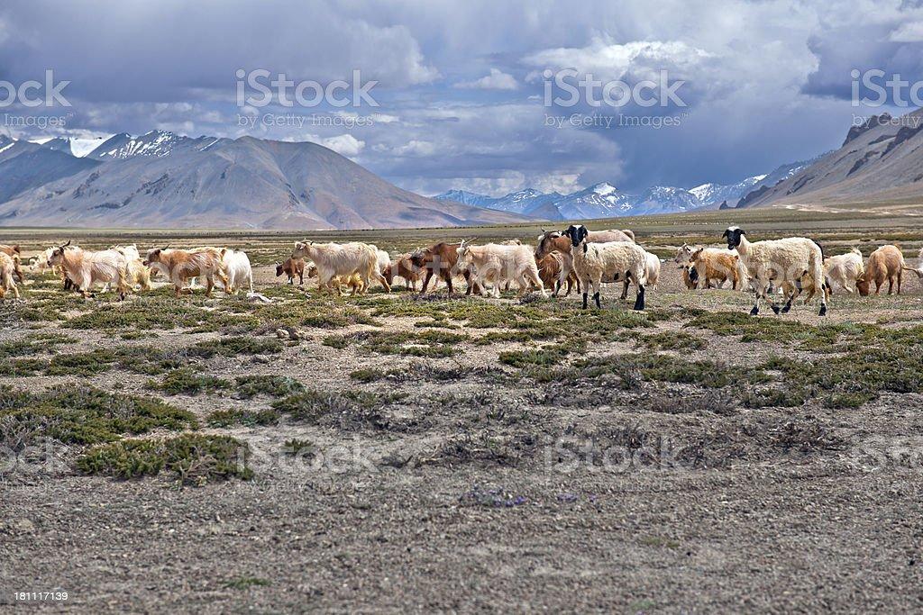 India Plains Plateau royalty-free stock photo