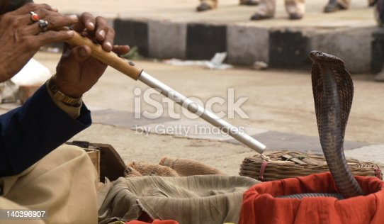 Snake charmer playing a flute for an Indian cobra.