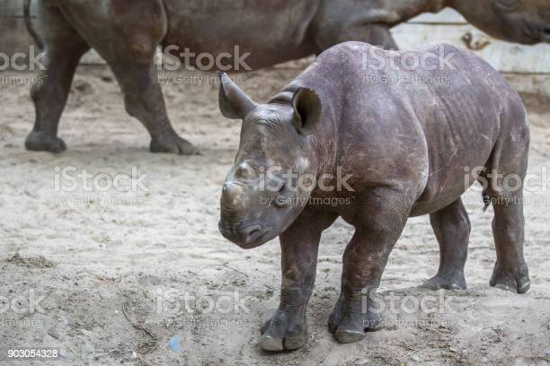 Indian baby rhino picture id903054328?b=1&k=6&m=903054328&s=612x612&h=t0b8ewoqj6 l6a0nvo3gmvlzrgspamwypwj0rbv1kgc=