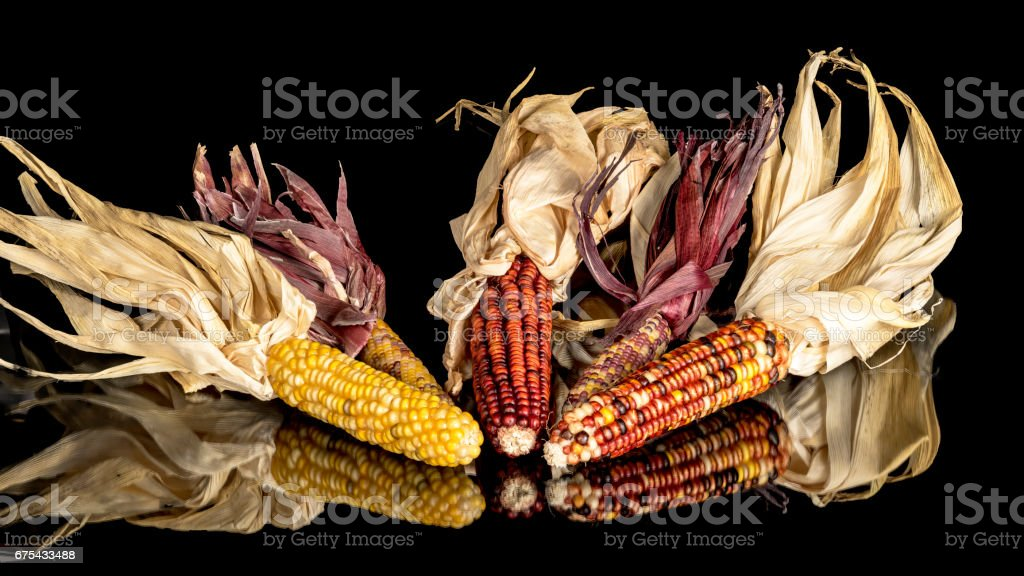 Indian corn laid in a reflective surface royalty-free stock photo