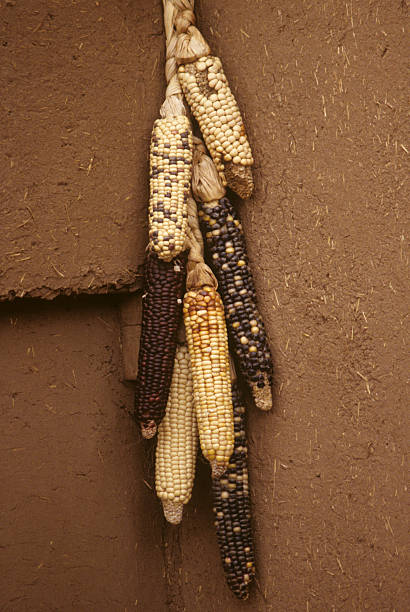 indian corn on adobe wall - hopi stock photos and pictures
