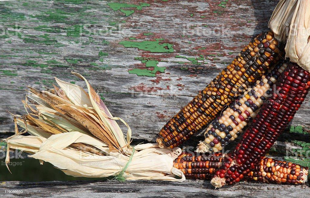 Indian Corn on wagonside royalty-free stock photo
