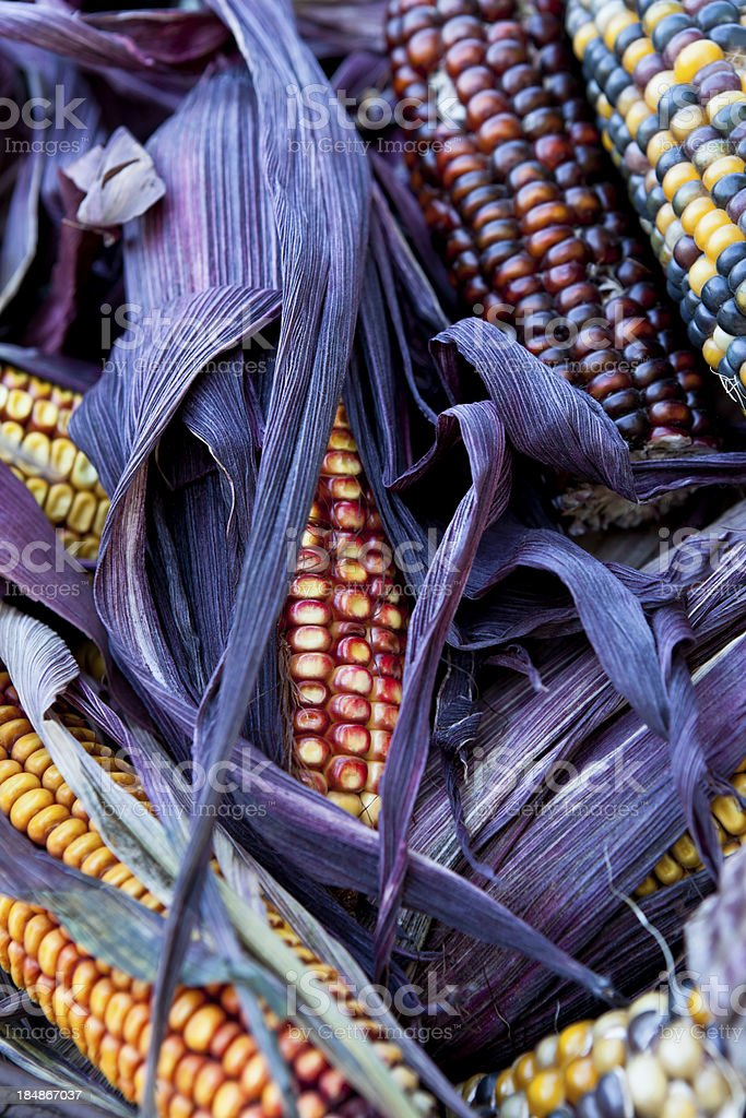 Indian Corn stock photo