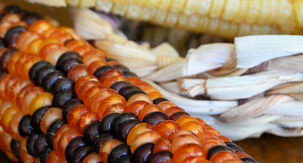 Indian Corn stock photo