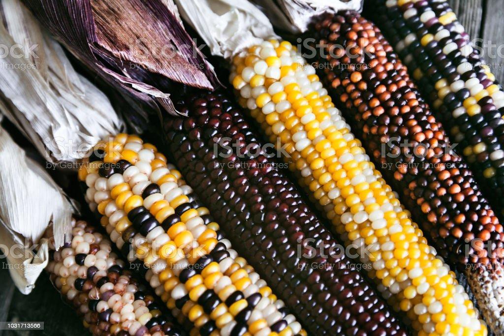 Indian Corn Stalks stock photo