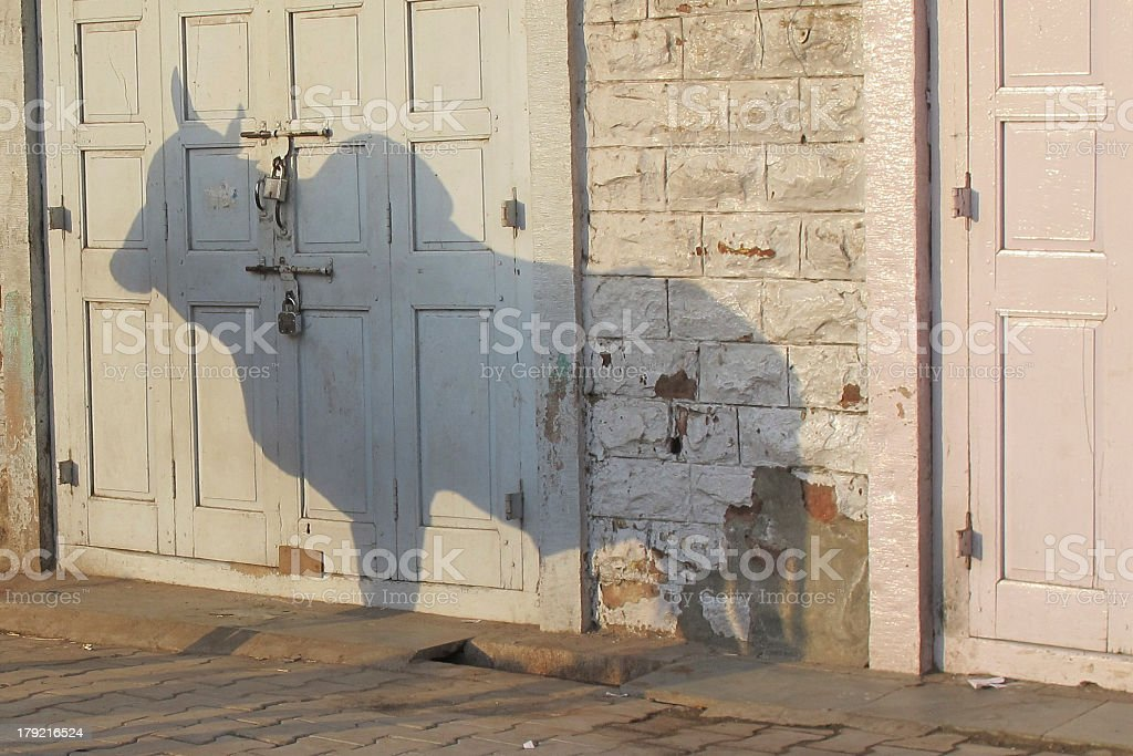 Indian Cow Shadow royalty-free stock photo