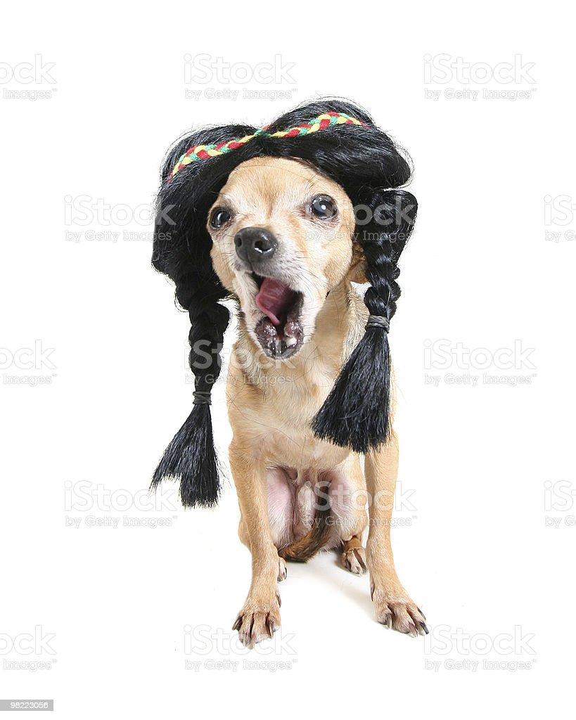 indian dog royalty-free stock photo