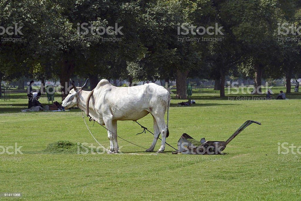 Indian Eco-Mower stock photo