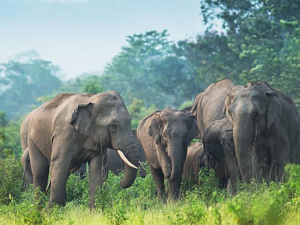 Changchill Elephant Sanctuary
