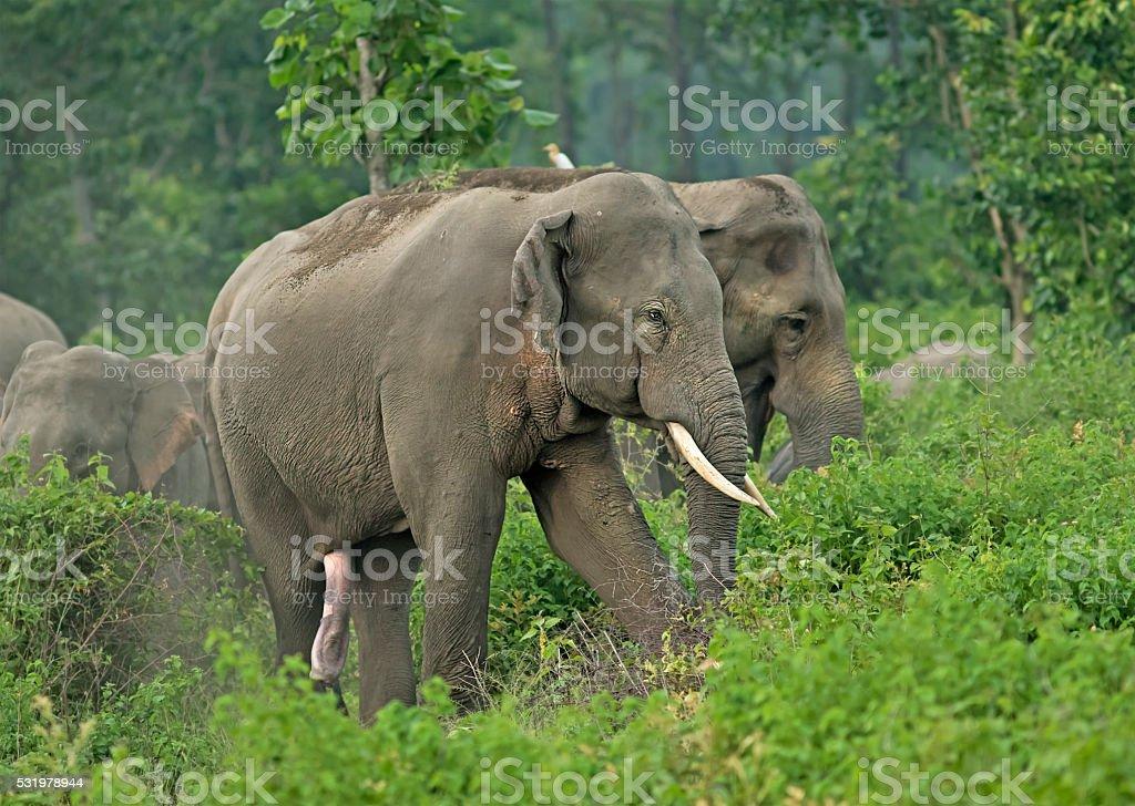 Elephant Sex Tubes