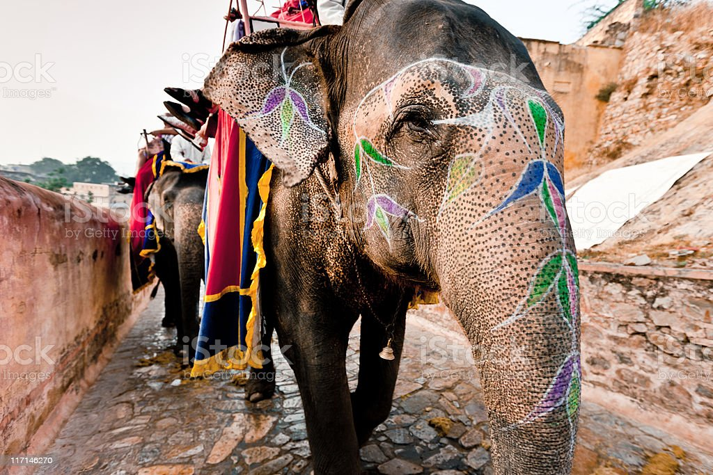 Indian Elephant Convoy Amber Palace Jaipur royalty-free stock photo