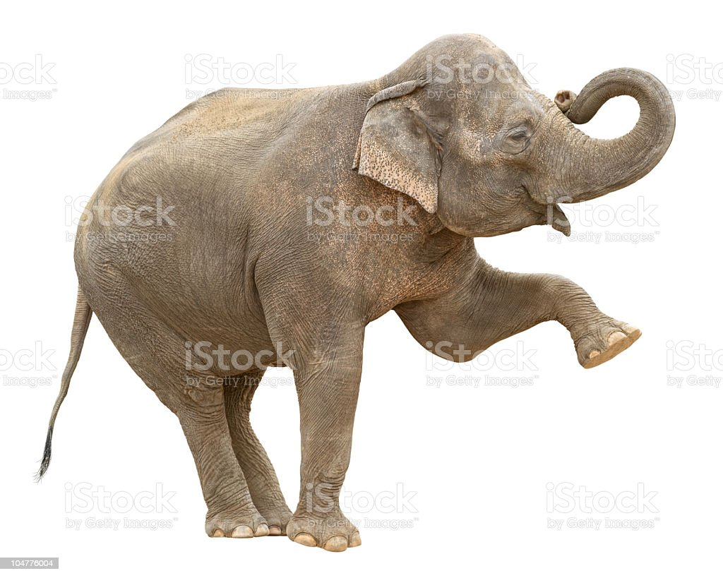 Indian elephant female greeting stock photo