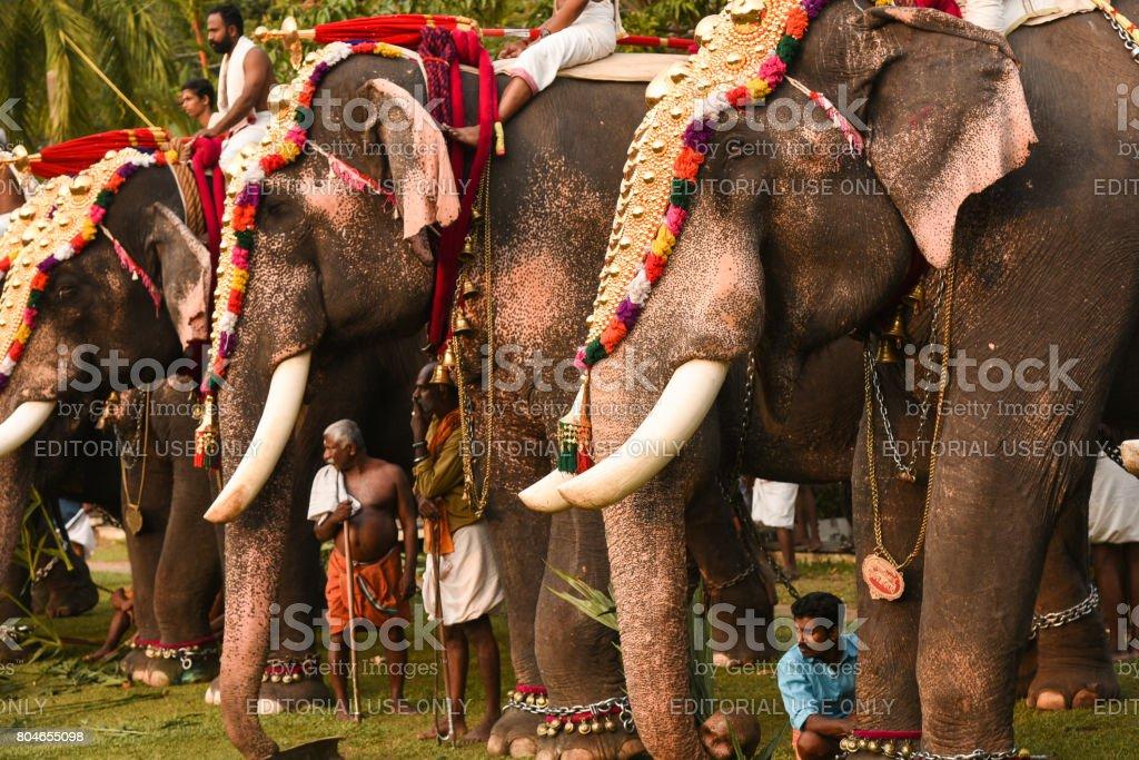 Indian elephant festival stock photo