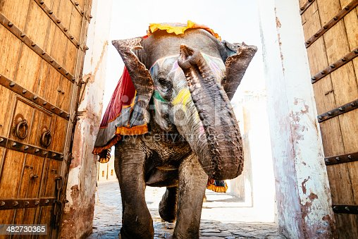 Decorated Indian Elephant running through ancient wooden doors of the serpentine archway up to the Amber Palace in Jaipur, India.