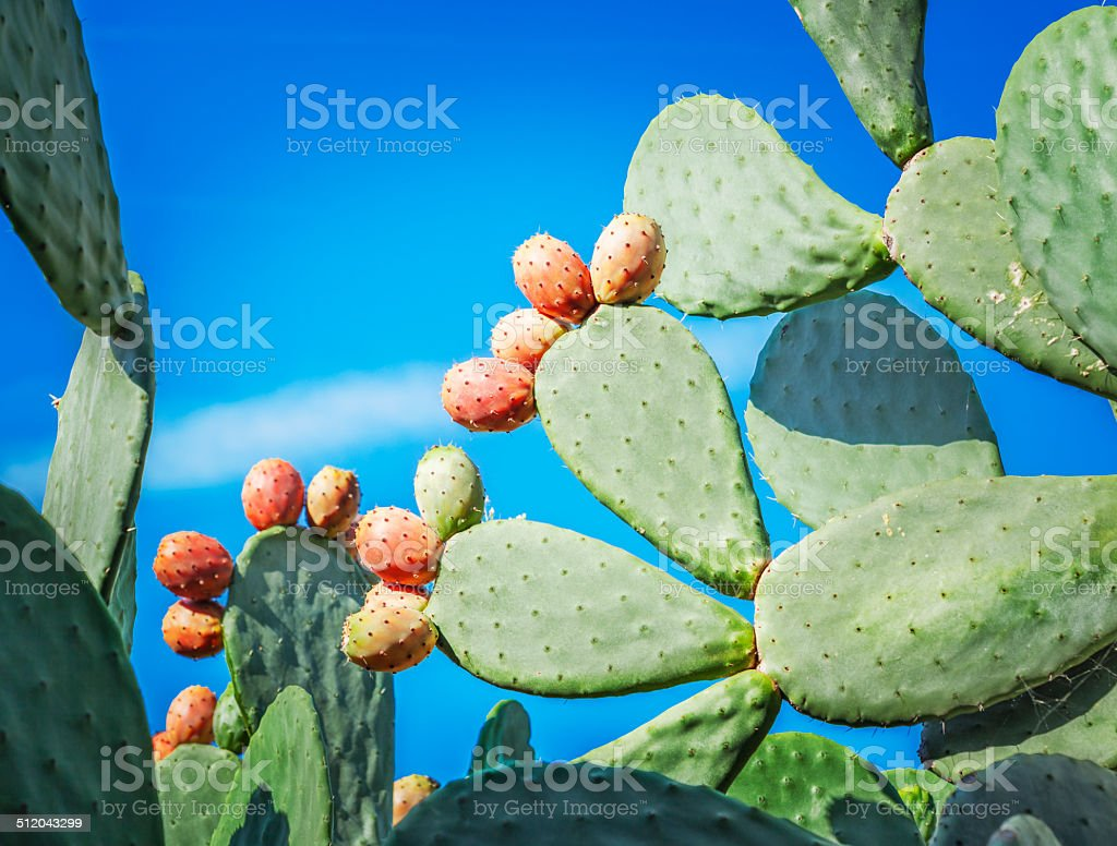 Indian Fig stock photo